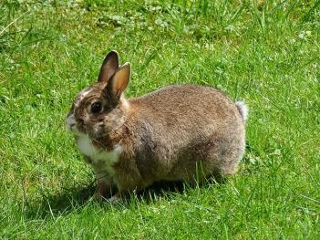rabbit-995045_960_720.jpg