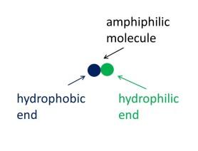 amphiphilic-cropped