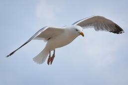 bird-2351177_640